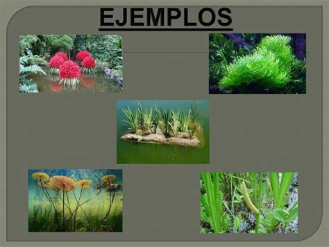 imagenes de jardines acuaticos powerpoint las plantas acu 225 ticas y terrestres