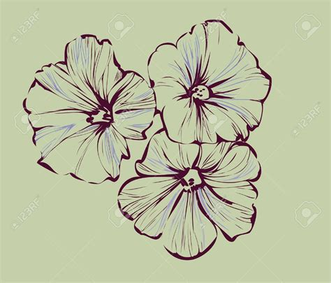 morning glory flower tattoo designs morning stock vector illustration and royalty free