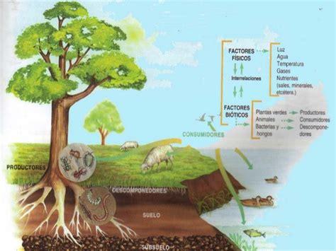 cuantas cadenas troficas hay en esta red flujo de energia de un ecosistema