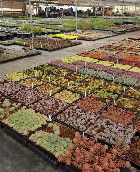 Sloat Garden Center Hours by Succulents Sloat Garden Center