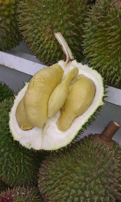 durianlicious  sultan durian