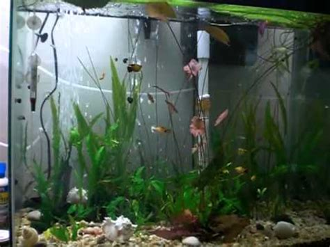 membuat aquarium filter belakang how to put a heater filter in a tank youtube