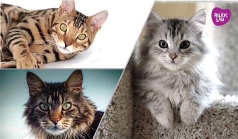 baka kucing  cantik  comel  dunia