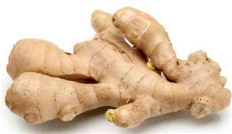uso jengibre en la cocina jengibre las plantas medicinales