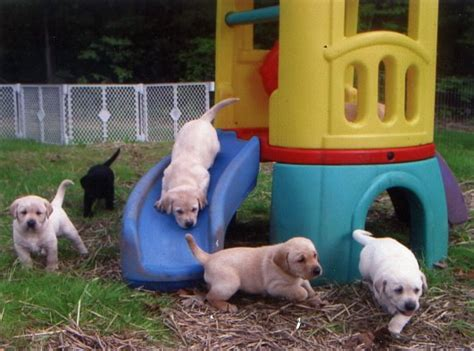 puppy playground kelso s philosophy page 7
