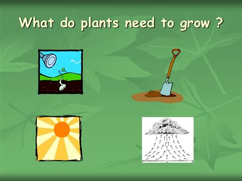 what of light do plants need chapter 2 what do plants need to grow