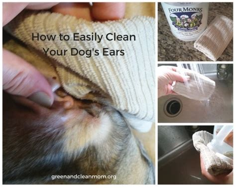 cleaning dogs ears with vinegar clean your s ears naturally with vinegar
