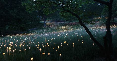 Field Of Light by Field Of Light Artist Uses 50 000 Lights To Turn Desert