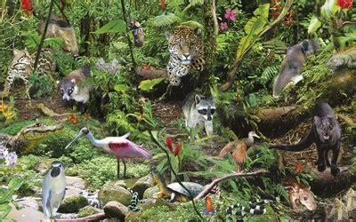 imagenes de flores y animales especies de animales y plantas