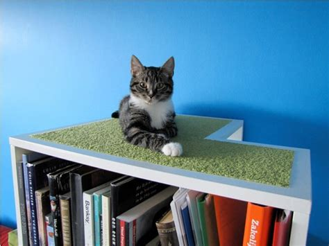 the catcase a bookcase and a ideal playground for your