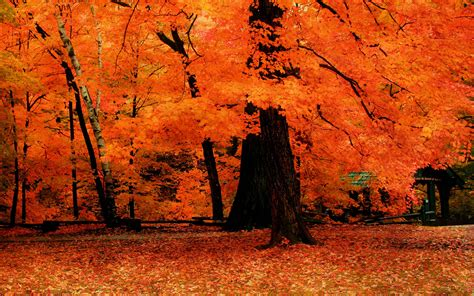 fall trees trees and fall on fall trees wallpapers wallpaper cave