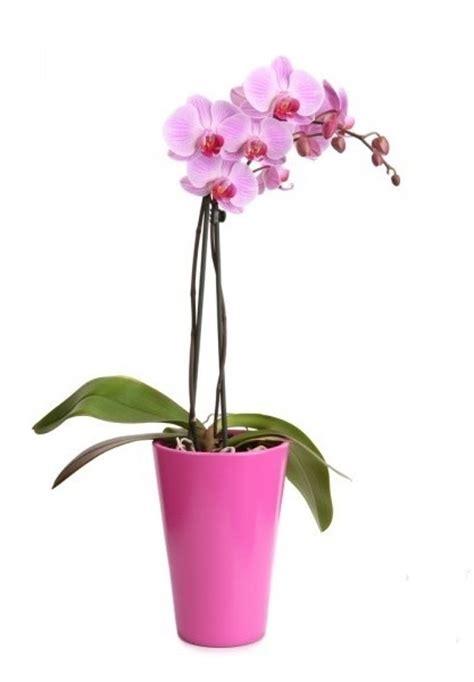 vaso per orchidee vasi per orchidee orchidee modelli di vasi per orchidee