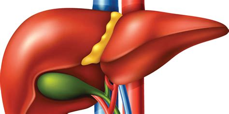 raised liver function