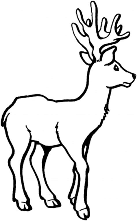 cartoon deer coloring pages cartoon whitetailed deer clipart best
