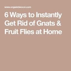 7 Ways To Get Rid Of Fruit Flies by 1000 Images About Gardening Pesky Fruit Flies Gnats On