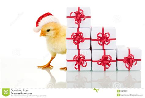 christmas chicken with presents stock image image 35212021