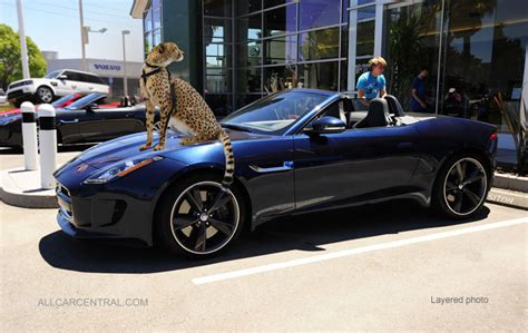 is a jaguar faster than a cheetah 2014 jaguar f type test drive
