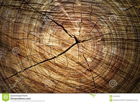 abstract section abstract cross section wood stock images image 24018524