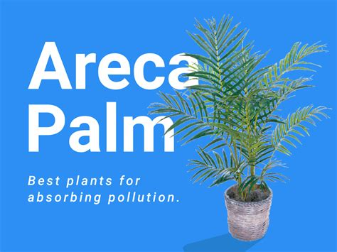 best plants for air quality 100 best plants for air quality 25 easy houseplants
