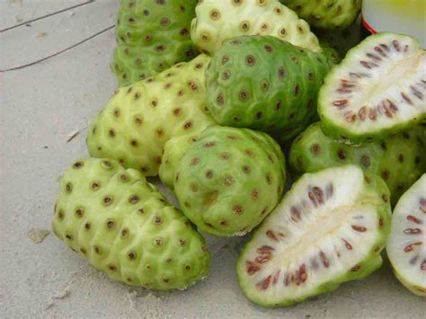 Teh Noni organic noni fruit medicinal uses health benefits
