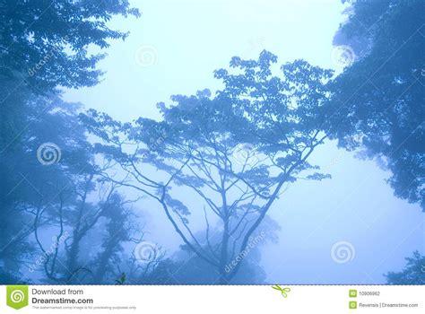 manana azul ma 241 ana azul en el bosque con niebla