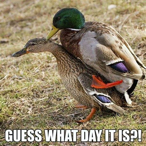 duck boat jokes 17 best images about waterfowl hunting on pinterest duck