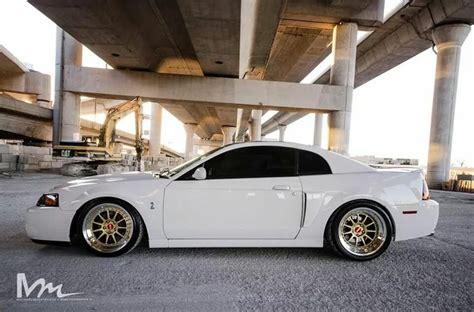 Custom White 03 03 04 cobra bad cars inspiration dreams and mustangs