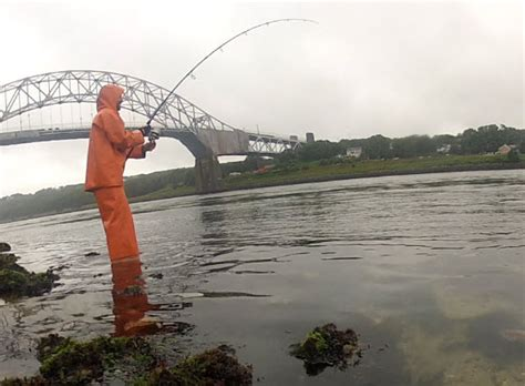 fishing report cape cod cape cod canal fishing report for late july