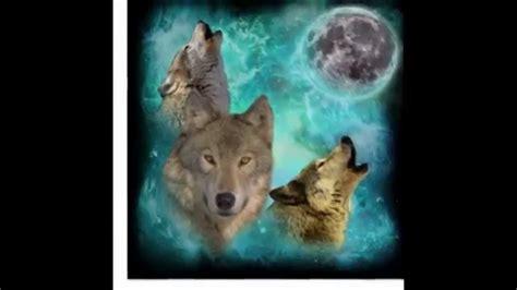 imagenes terrorificas de lobos las mejores fotos de lobos youtube