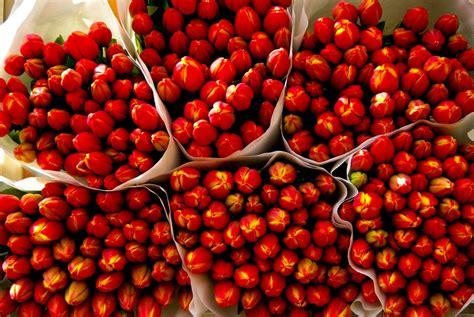 mercato fiori mercato dei fiori galleggiante bloemenmarkt vivi amsterdam
