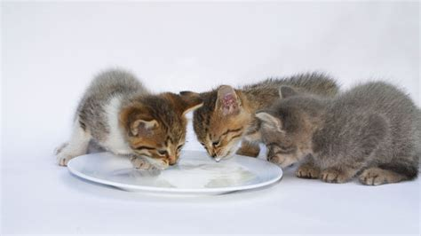 can cats eat food can cats eat baby food pet orb