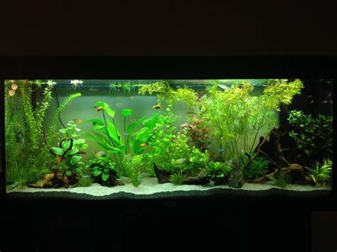 aquarium design criteria pretty aquaria freshwater pinterest nice d and tanks