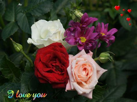 wallpaper flower i love you love wallpaper valentine roses