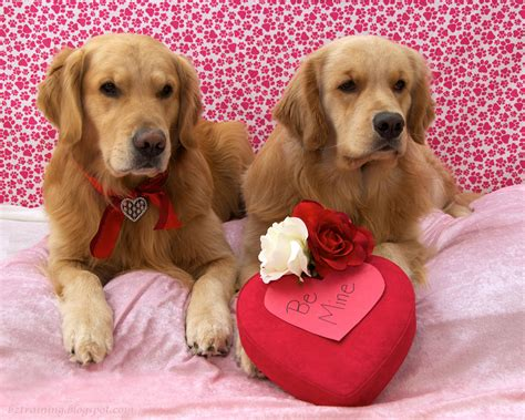 valentines puppy s day wallpaper wallpapersafari