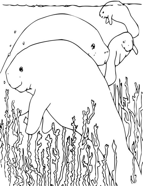 manatee coloring page for kids free printable picture