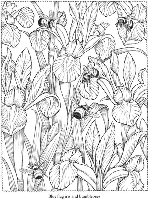 coloring pages of flowers and bees free coloring pages of bees and flowers