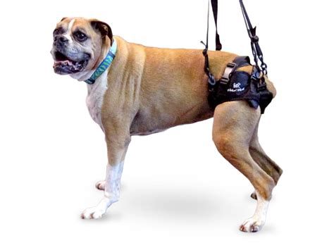 rear lift harness walkin lift rear harness zoomadog for canine hip dysplasia