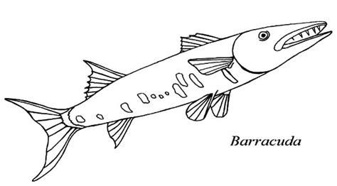 Barracuda Fish Coloring Page | barracuda fish sharp teeth coloring pages barracuda fish