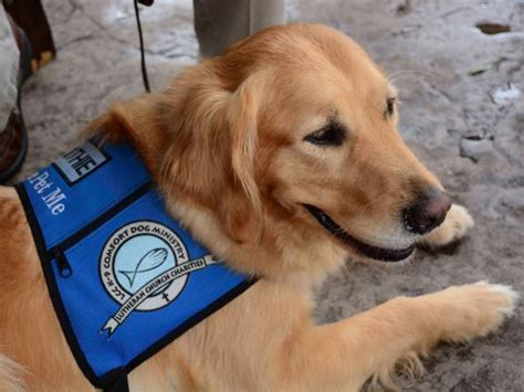 lutheran comfort dogs why dogs are comforting after tragedy business insider