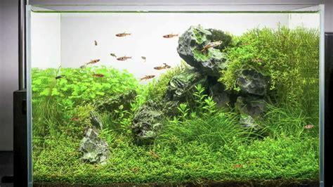setting   planted aquarium youtube