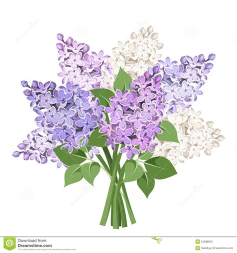 lilac clipart lilac clipart lilac flower pencil and in color lilac