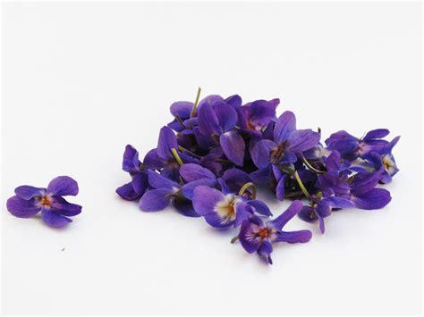 Fleur Violette by Photo Gratuite Violettes Fleurs Violet Violette