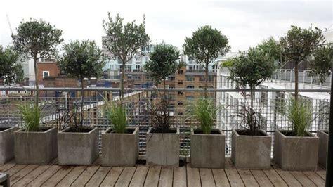 terrasse quer oder längs terrasse gestalten mit olivenb 228 umen in beton k 252 bel
