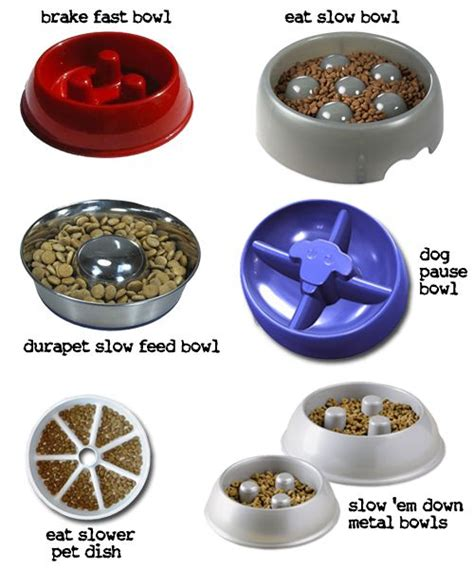 dog wont eat out of bowl quot slow down quot bowls to keep your dogs from eating too fast