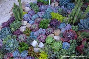 real world gardener create a succulent garden in design
