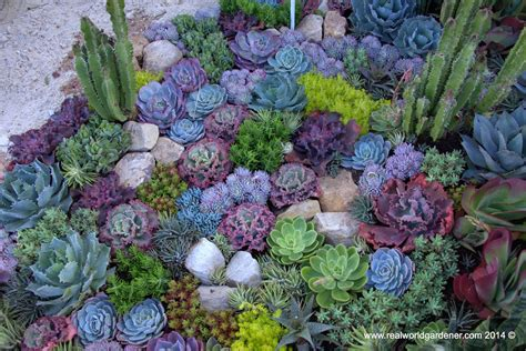 real world gardener create a succulent garden in design