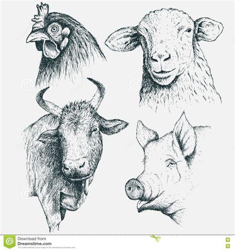 monochrome animals set of farm animals monochrome stock photography