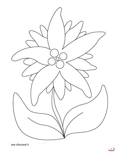 disegni di piante e fiori piante aromatiche disegni midisegni