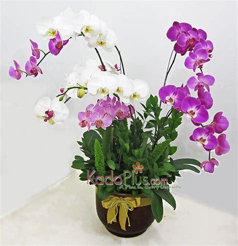 Bunga Hias Rangkaian Decorasi Artficial Flower potted assorted orchids 8 stems toko bunga