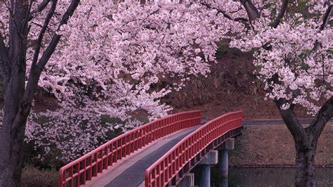 Japanische Tapete by Japanische Blumen Tapete